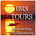 Ibis Tours - birdwatching, wildlifewatching in Romania
