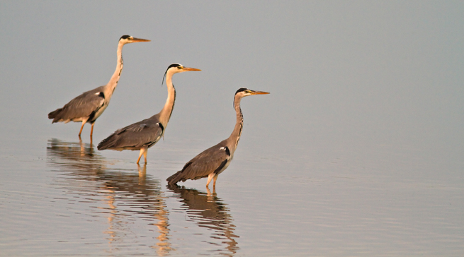 Photographing the Danube Delta with Canon 7D
